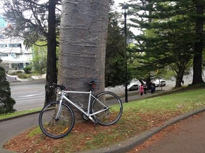 ニュージーランド 外山みのる 個人ガイド アルバート パーク オークランド カウリ