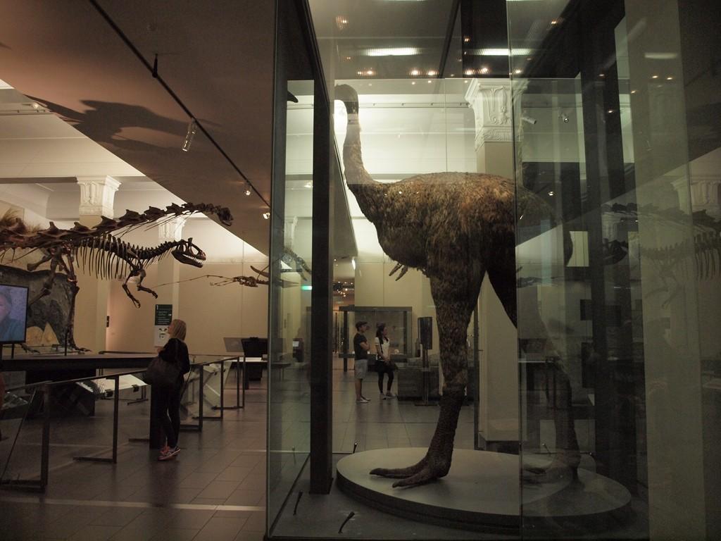 オークランド 博物館 ゴシック 観光 ミュージアム スポット ドメイン モア