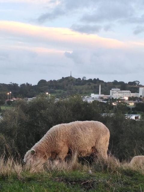 オークランド 穴場 観光 スポット 景色 ドメイン St john イーデン 羊 記念撮影 写真