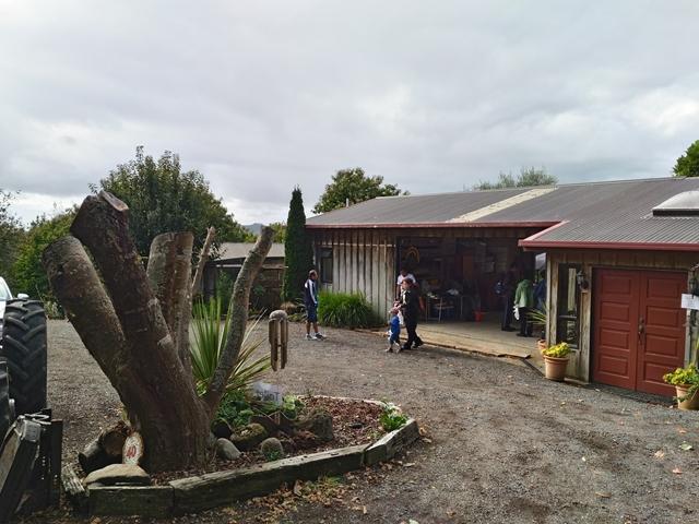 ニュージーランド 栗 クリ 栗拾い オークランド chestnut farm ridge farm