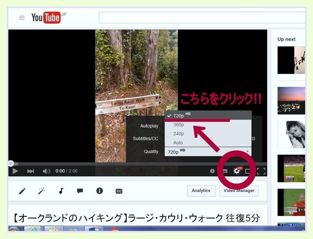 カウリ ワイタケレ ガイド 動画 観方 画質 ハイキング オークランド ニュージーランド